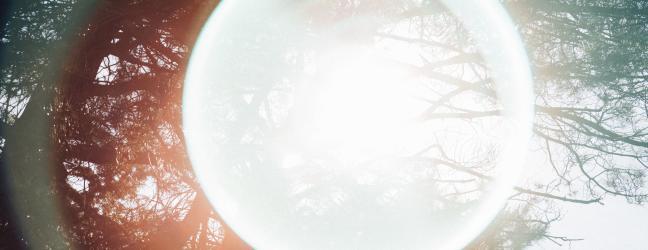 Imagen de arboleda con un haz de luz circular por delante